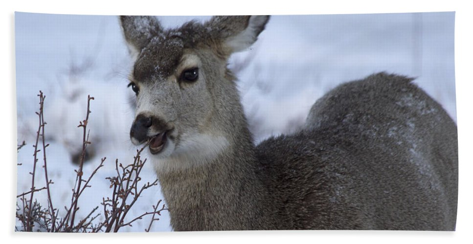 Nibble Beach Towel featuring the photograph A Quick Nibble by Shane Bechler