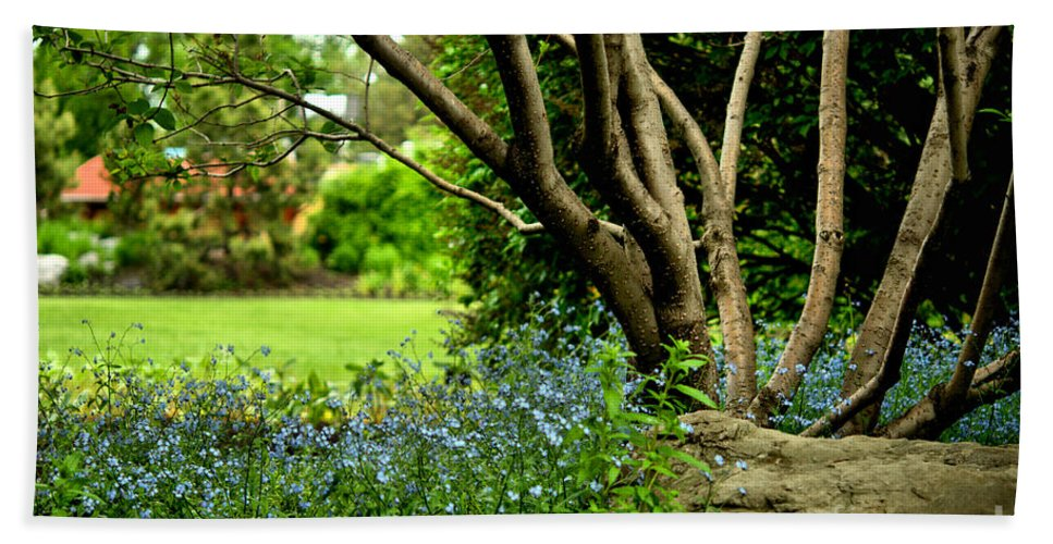 Tree Beach Towel featuring the photograph A Quiet Place by Matthew Naiden