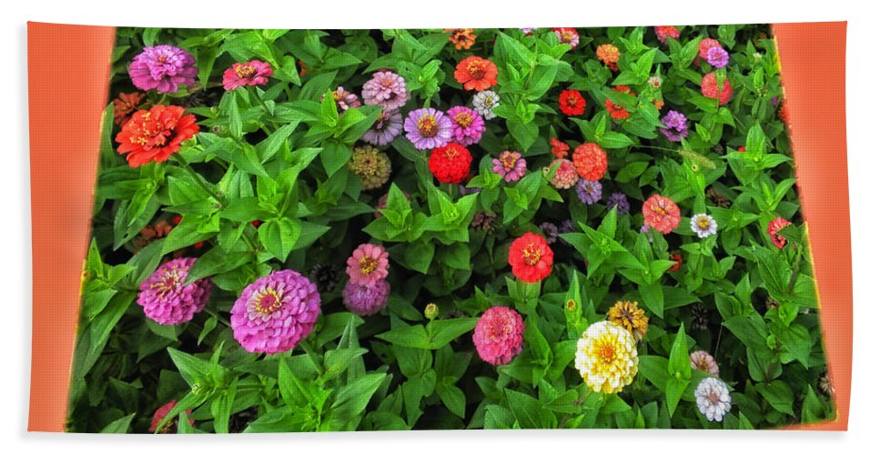 Floral Beach Towel featuring the photograph A Sea Of Zinnias 06 by Thomas Woolworth
