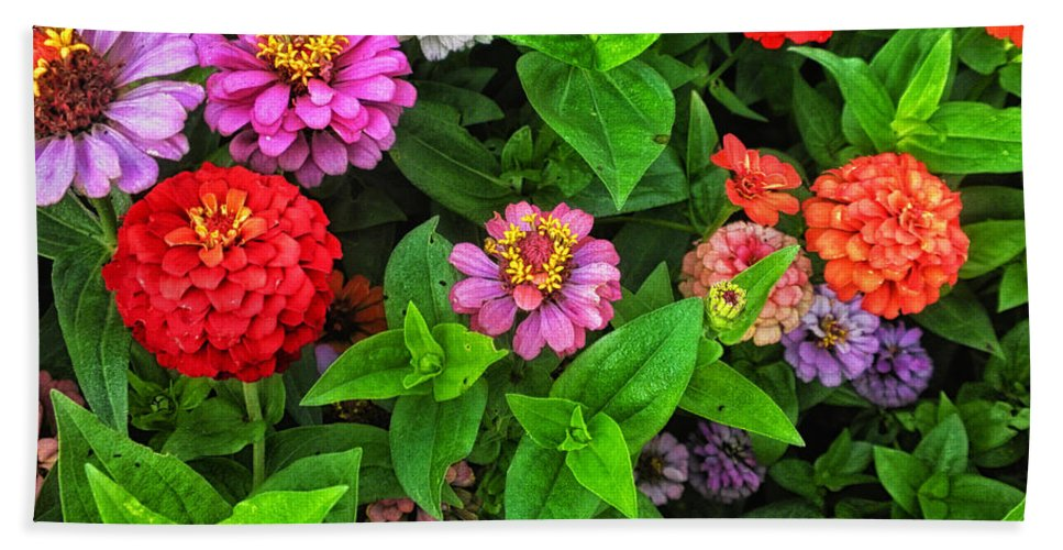 Floral Beach Towel featuring the photograph A Sea Of Zinnias 07 by Thomas Woolworth