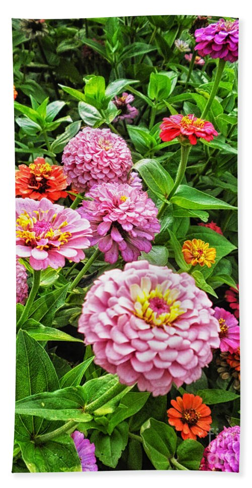 Floral Beach Towel featuring the photograph A Sea Of Zinnias 08 by Thomas Woolworth