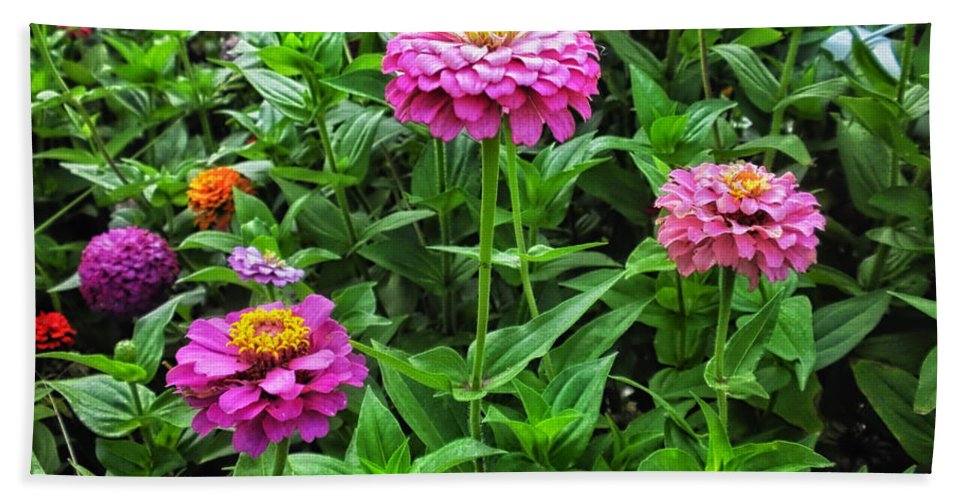 Floral Beach Towel featuring the photograph A Sea Of Zinnias 09 by Thomas Woolworth