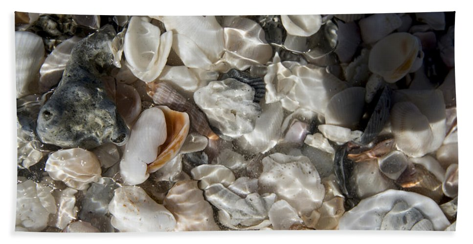 Sea Shells Beach Towel featuring the photograph A Sheller's View by Terri Winkler