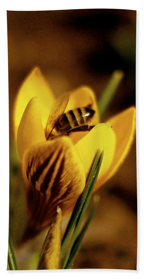 Yellow Beach Towel featuring the photograph A Sign Of Spring by Rona Black