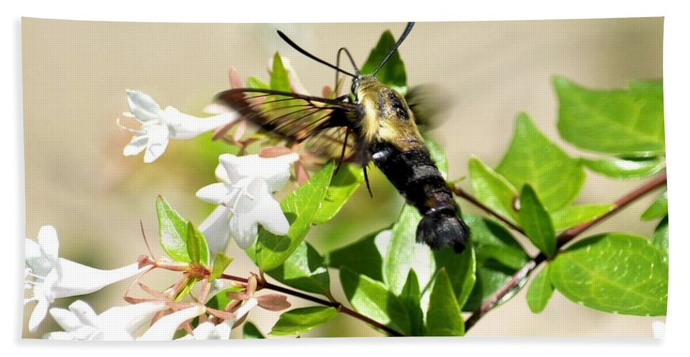 Sphinx Beach Towel featuring the photograph A Sphinx's Pollination by Maria Urso