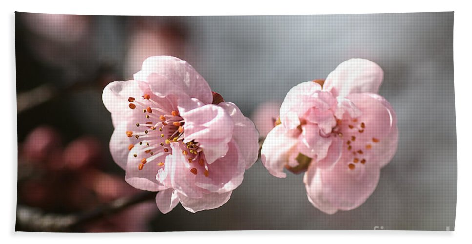 Spring Beach Towel featuring the photograph A Spring Dream by Joy Watson