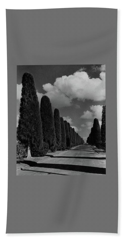 A Street Lined With Cypress Trees Beach Towel