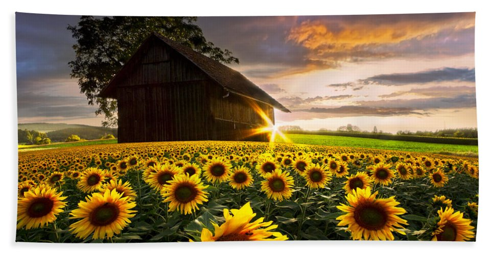 American Beach Towel featuring the photograph A Sunflower Moment by Debra and Dave Vanderlaan