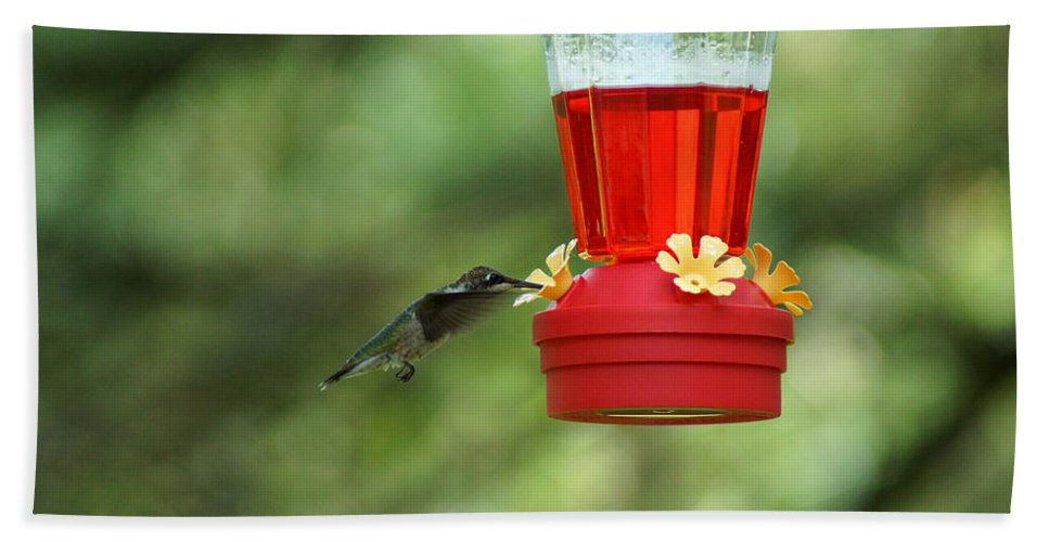 A Ruby-throated Hummingbird Beach Towel featuring the photograph A Tiny Little Ruby-throated Hummingbirds by Kim Pate