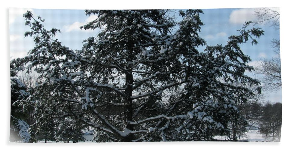 Landscape Beach Towel featuring the photograph A Tree In Winter by Sherri Williams