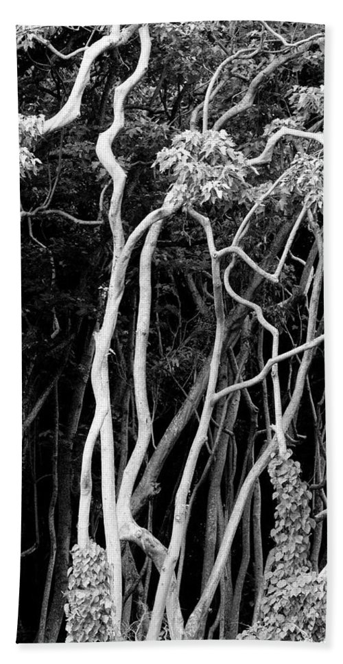 Abstract Beach Towel featuring the photograph A View Of A Tangled Mass Of Tree Trunks by Jonathan Kingston
