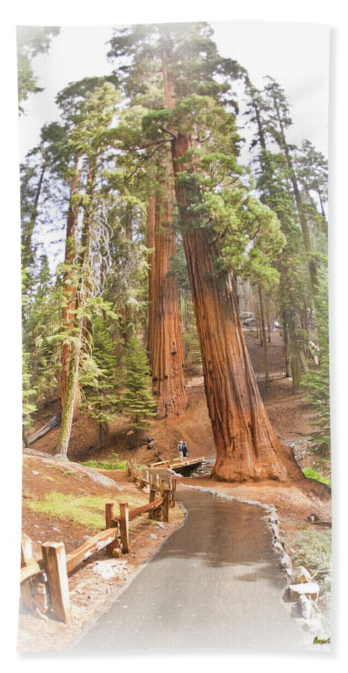Giant Beach Towel featuring the photograph A Walk Among The Giant Sequoias by Angela Stanton