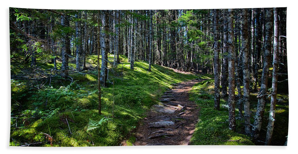 Maine Beach Towel featuring the photograph A Walk In The Woods by John Haldane