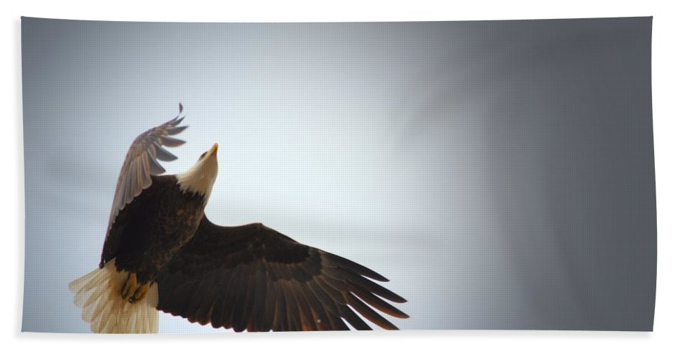 Bald Eagle Beach Towel featuring the photograph Above All Else 2 by Bonfire Photography