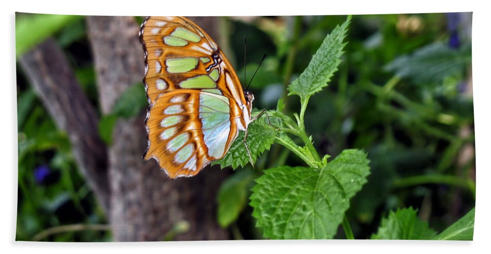 Butterfly Beach Towel featuring the photograph Admiring The Garden by Thomas Woolworth