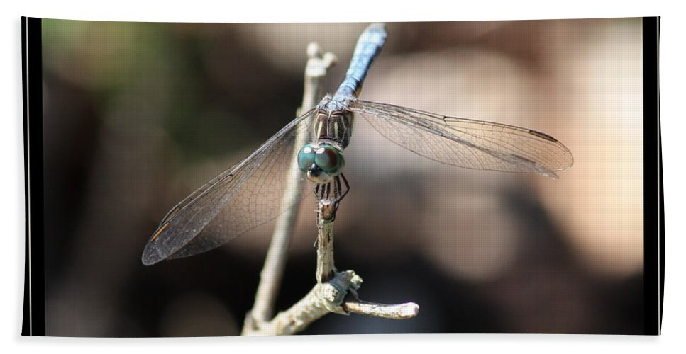 Dragonfly Beach Towel featuring the photograph Adorable Dragonfly With Border by Carol Groenen