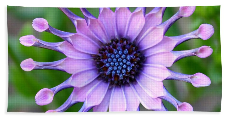 Daisy Beach Towel featuring the photograph African Daisy - Square Format by Carol Groenen