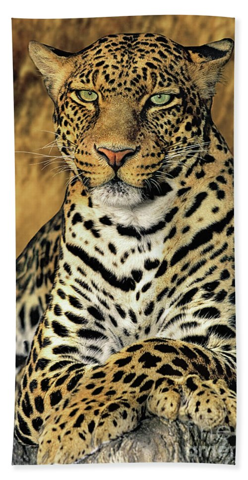 African Leopard; Panthera Pardus; Cat; Feline; Mammal; African Wildlife; Portrait; Dave Welling; Wildlife Rescue; Panthera Pardus; Wildlife Photography; Photograph; Predator; Hunter; Roaring Cat; Endangered Wildlife; Stare; Eyes; Contemplating Beach Towel featuring the photograph African Leopard Portrait Wildlife Rescue by Dave Welling