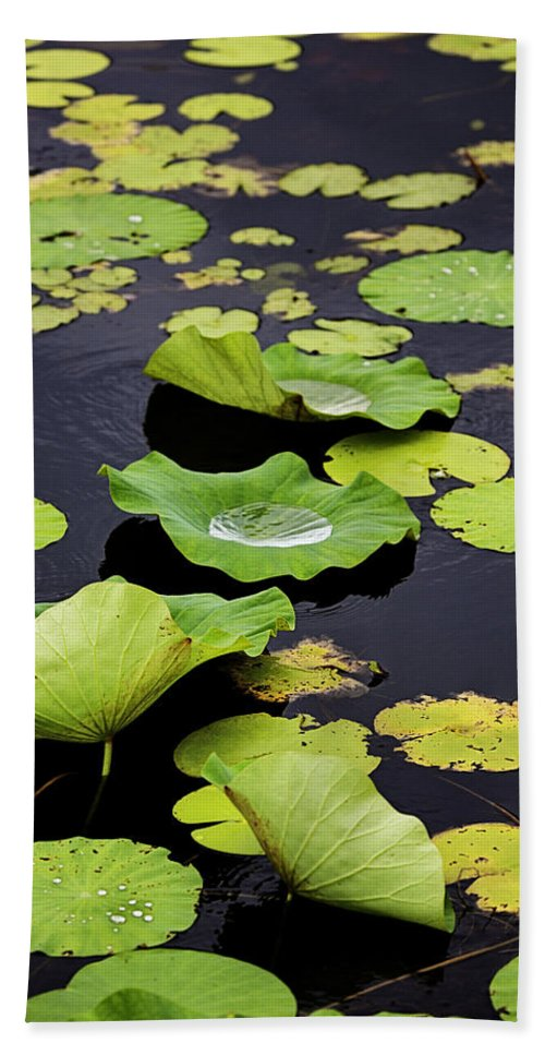 Rain Beach Towel featuring the photograph After The Rain- Gungarre Billabong V3 by Douglas Barnard