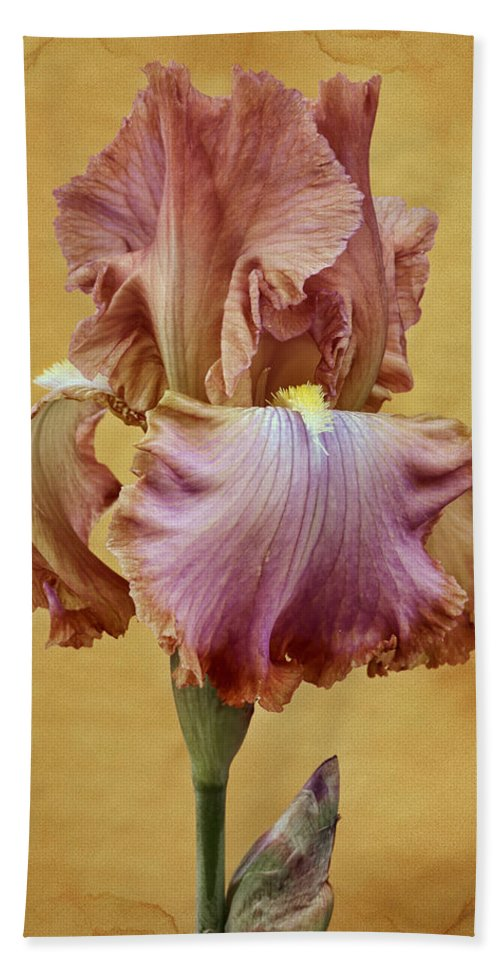 Bearded Iris Beach Sheet featuring the photograph Afternoon Delight - 1 by Nikolyn McDonald
