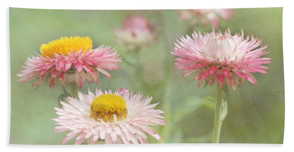 Flower Beach Towel featuring the photograph Afternoon Delight by Kim Hojnacki