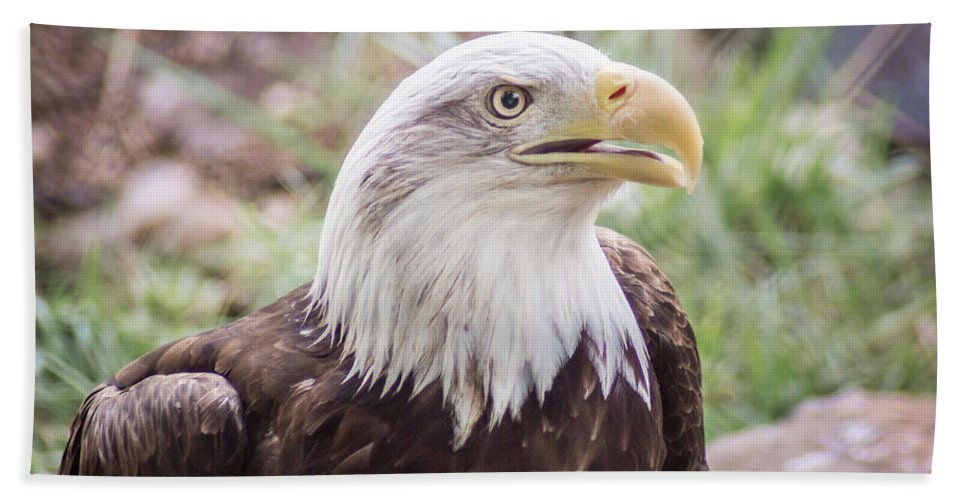 Bird Beach Towel featuring the photograph Aging Patriot by Bill Pevlor