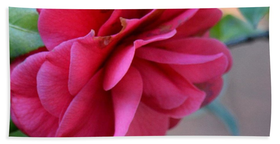 Alabama's Fading Camelia Beach Towel featuring the photograph Alabama's Fading Camelia by Maria Urso
