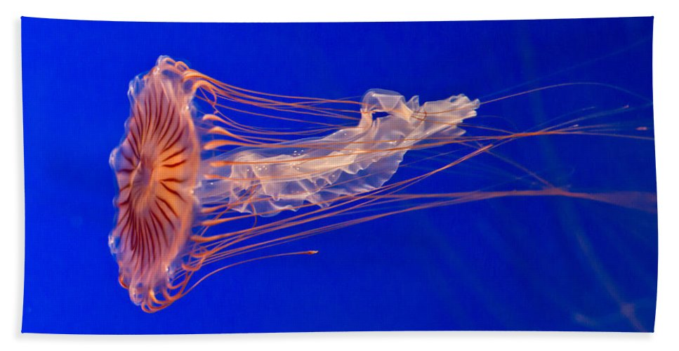 Jellyfish Beach Towel featuring the photograph Alien by Eti Reid