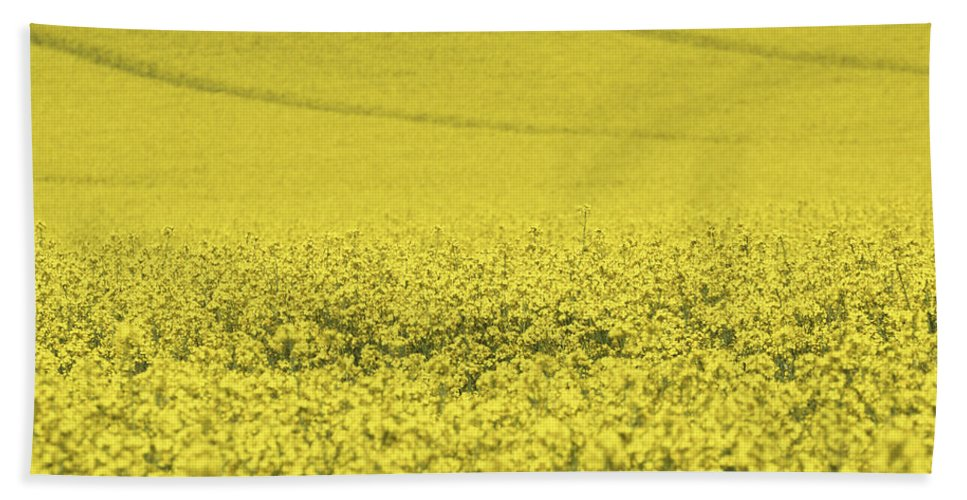 Rapeseed Beach Towel featuring the photograph All Across The Land 5 by Wendy Wilton