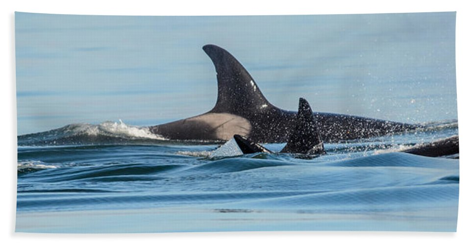 Orca Beach Towel featuring the photograph All In The Family by Roxy Hurtubise