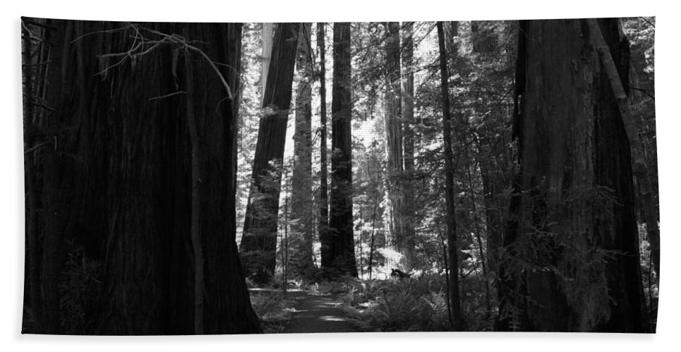 Humboldt Redwoods State Park Beach Towel featuring the photograph All Is Quiet by Laurie Search