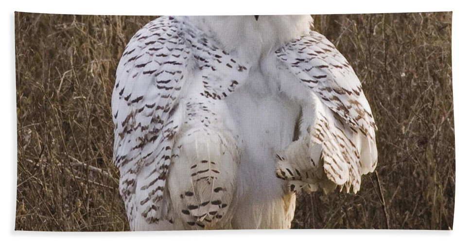 Snow Owl Beach Towel featuring the photograph All Turned Around by Rob Mclean