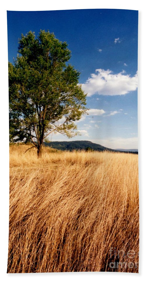 Tree Beach Towel featuring the photograph Alone On A Hill by Laura Corebello