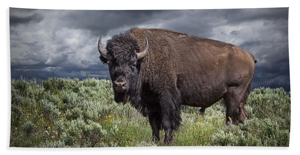 Bison Beach Towel featuring the photograph American Buffalo Or Bison In Yellowstone by Randall Nyhof