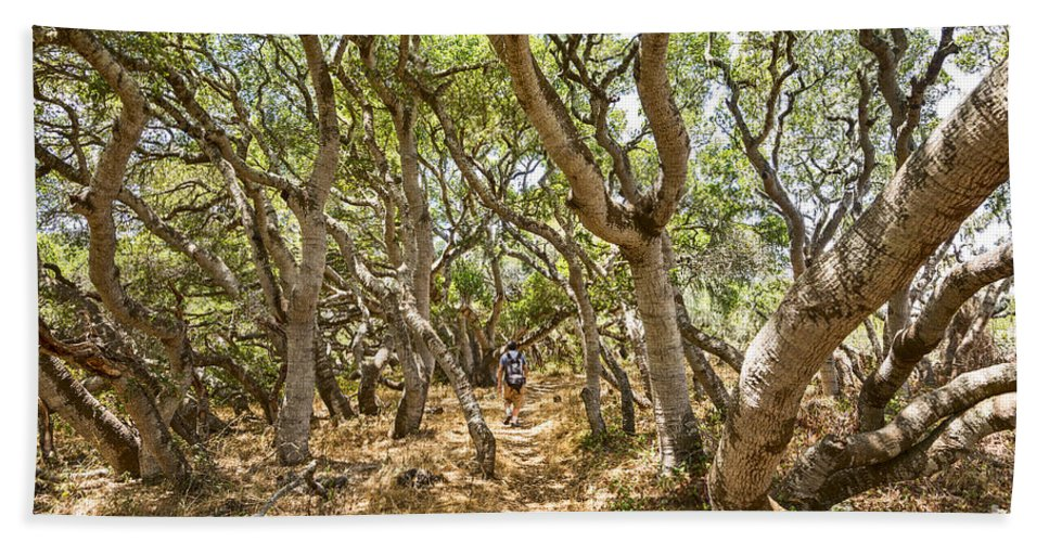 Los Osos Oak State Natural Reserve Beach Towel featuring the photograph Among The Trees - The Mysterious Trees Of The Los Osos Oak Reserve by Jamie Pham