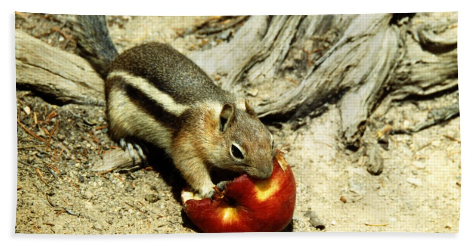 Apple Beach Towel featuring the photograph An Apple A Day by Marilyn Hunt
