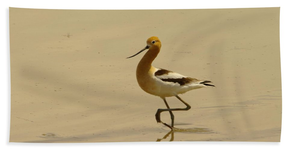 Birds Beach Towel featuring the photograph An Avocet Wading The Shore by Jeff Swan