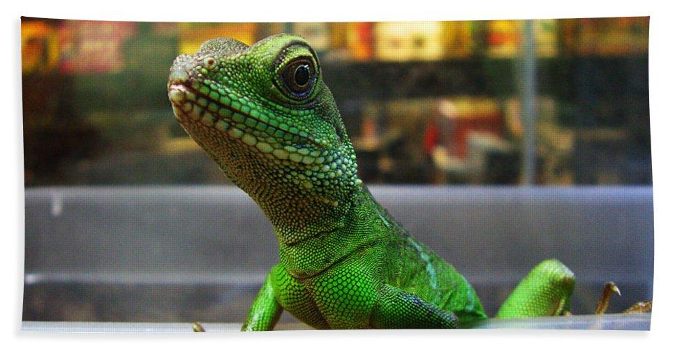 Gecko Beach Towel featuring the photograph An Escape Artist by Xueling Zou