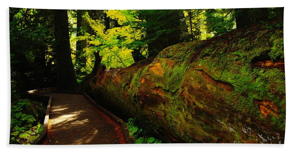 Trees Beach Towel featuring the photograph An Old Fallen Tree by Jeff Swan