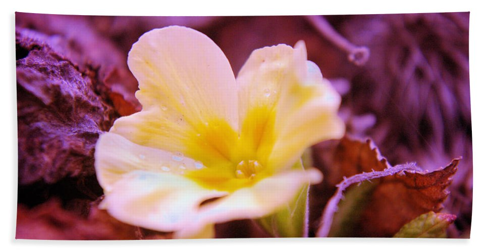 Flowers Beach Towel featuring the photograph An Open Bud by Jeff Swan