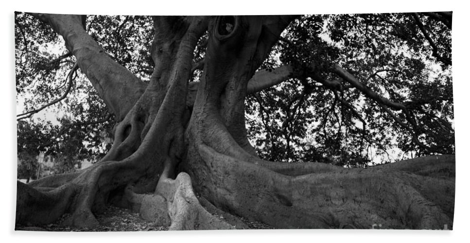 Tree Beach Towel featuring the photograph Ancestor by Amanda Barcon