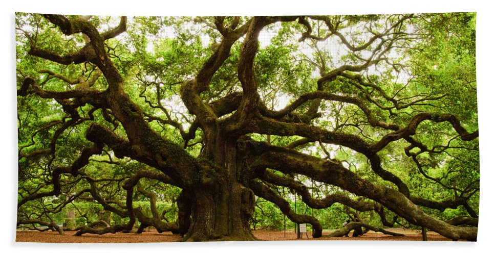 Tree Beach Towel featuring the photograph Angel Oak Tree 2009 by Louis Dallara