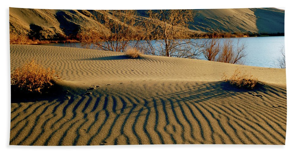 Coyote Tracks Beach Towel featuring the photograph Animal Tracks In The Sand by Ed Riche
