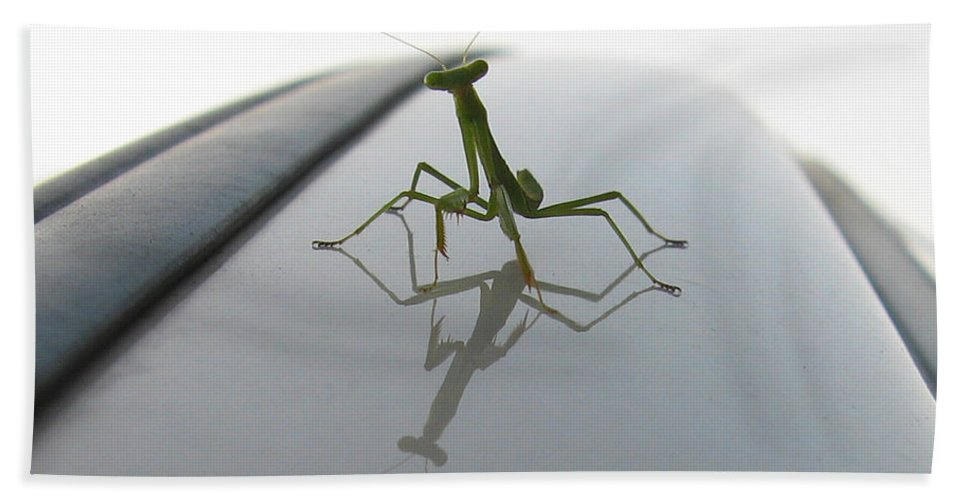 Praying Mantis Beach Towel featuring the photograph Another Young Mantis by Dan McCafferty