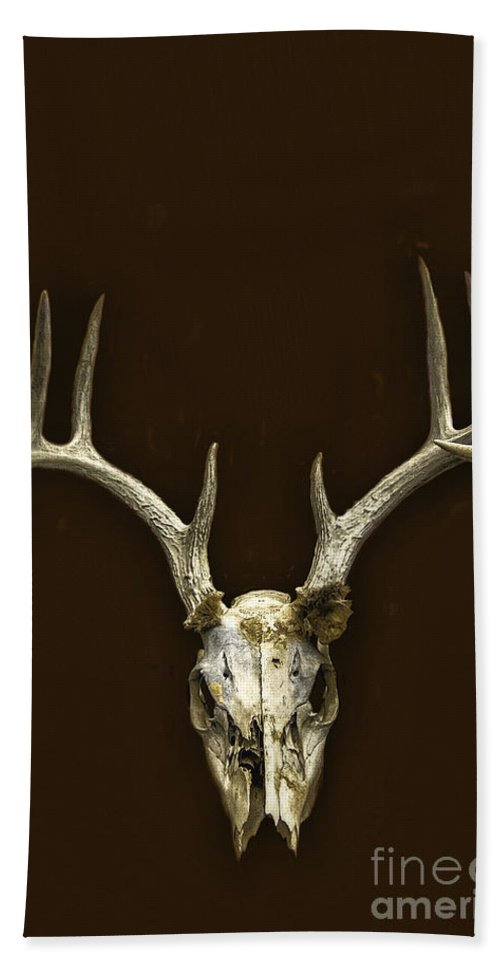 Skull Beach Towel featuring the photograph Antlers by Margie Hurwich