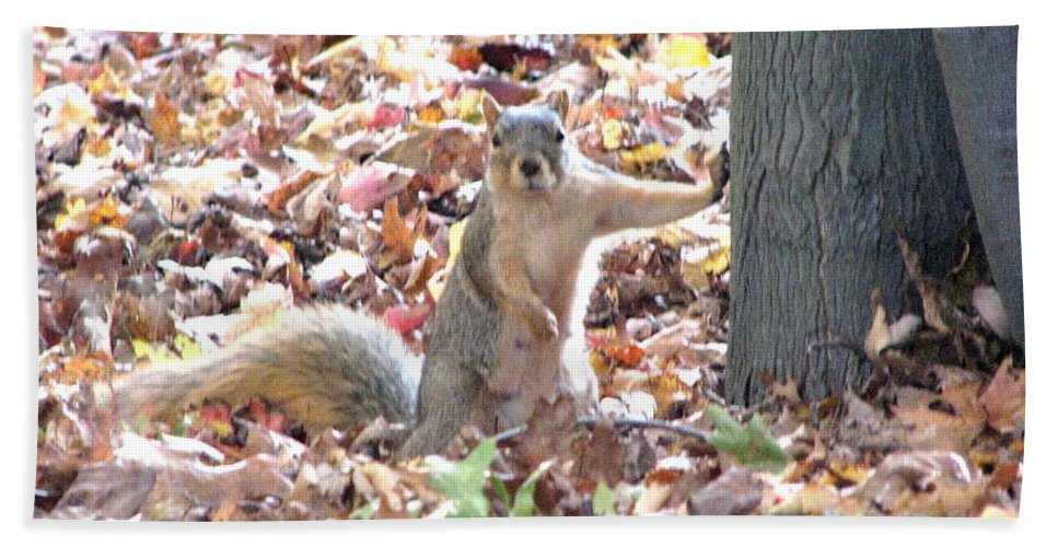Squirrel Beach Towel featuring the photograph Are You Looking At Me ? by Michael Krek