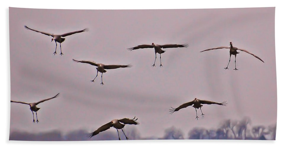 Cranes Beach Towel featuring the photograph Are You Sure This Is The Spot by Don Schwartz