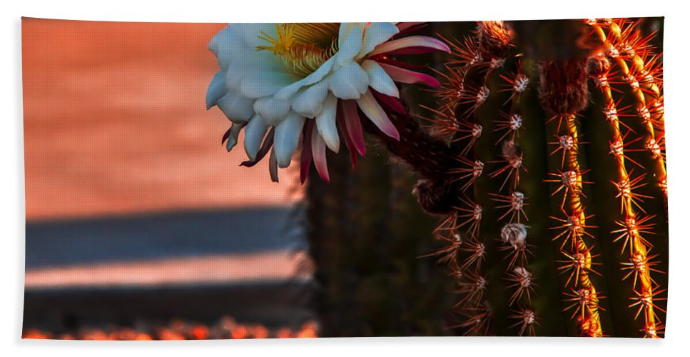 Arizona Beach Towel featuring the photograph Argentine Cactus by Robert Bales