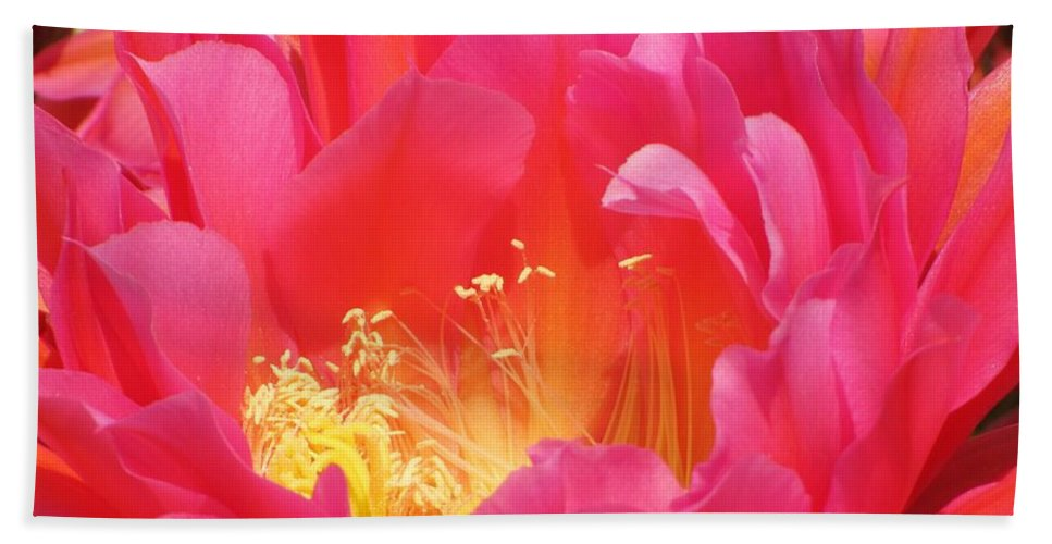 Cactus Flower Beach Towel featuring the photograph Arizona Cactus Beauty by Michelle Cassella
