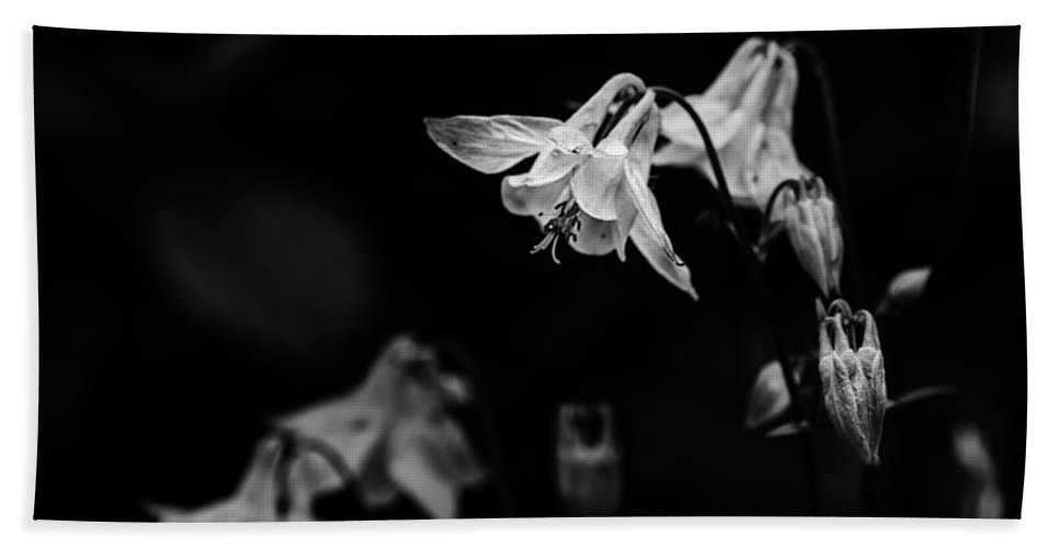 Columbine Beach Towel featuring the photograph As Darkness Falls by Susan Capuano